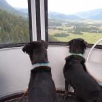 Bergbahn fahren ist schön :-)