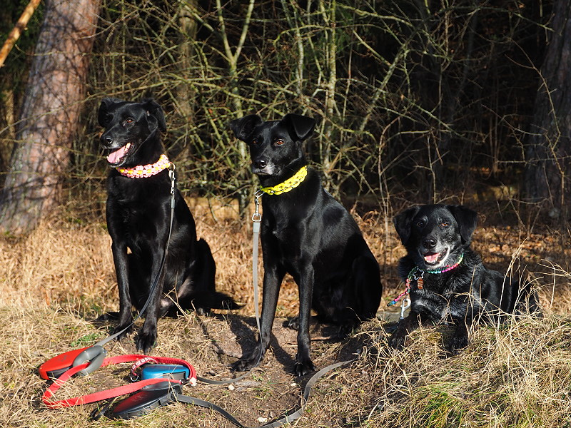 Hundegruppenfoto - Shiva, Yassou und Cosmo