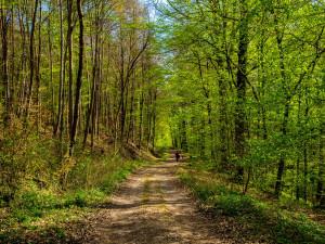 Wandern durch den Frühlingswald