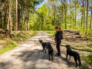 Iris mit Hunden