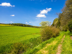 saftige Wiesen und Felder