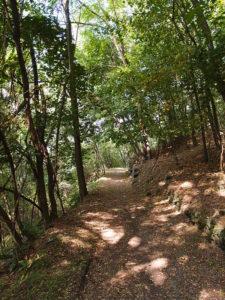 Waldweg Wanderung zum Forte colle delle benne