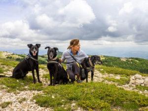 Iris mit den Hunden am Montagne de Lure