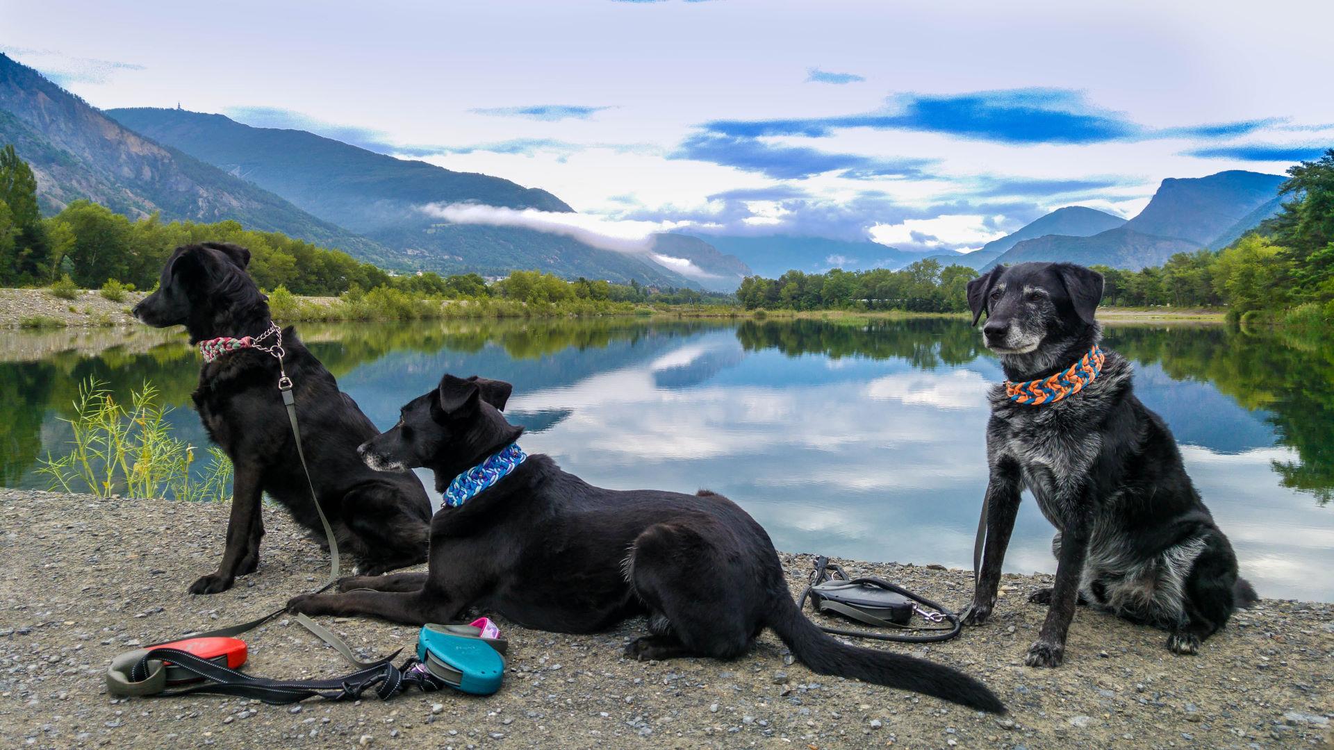 Shiva, Yassou und Cosmo an den drei Seen von Rochebrune