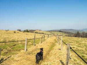 Wiesenweg zwischen Weiden auf dem Moorrundweg