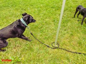 Die Hunde wickeln sich mit der Leine ständig um die Markisenstange und können diese umreißen