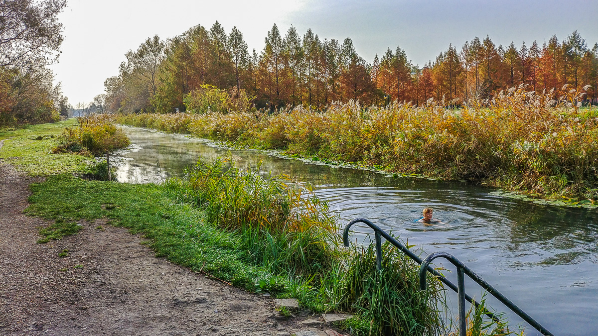 Iris badet im Kanal von Heviz