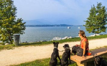Camping am Gardasee mit Hund - Manerba del Garda