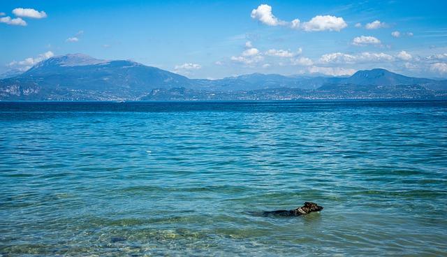 Hund schwimmt im Gardasee