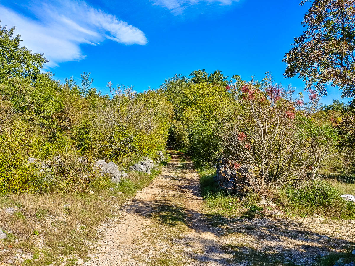 Forstweg zur Ausgrabungsstätte Mohorov
