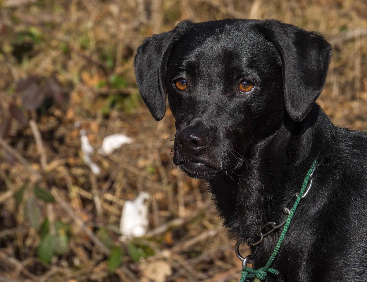 Portrait schwarzer Hund